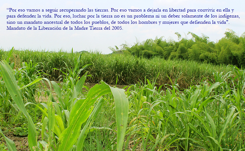 Las comunidades están tumbando el monocultivo de caña para sembrar comida en los sitios de la Liberación de la Madre Tierra.
