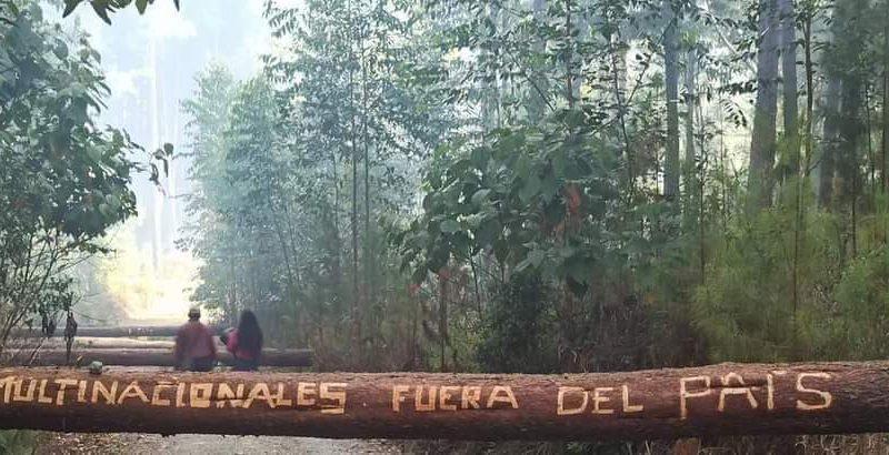"""""""Recuperar la tierra y la Memoria para recuperarlo todo"""" Sentencia y llamado del pueblo Misak frente al crimen de la transnacional"""